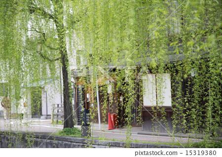 Green Curtain 15319380