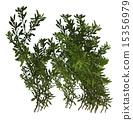 Green Plant Shrub 15356979