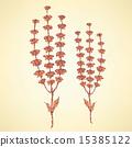 Sketch basil herb in vintage style 15385122