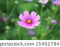Cosmos 15402784