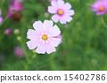 Cosmos 15402786