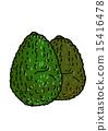 鳄梨 15416478