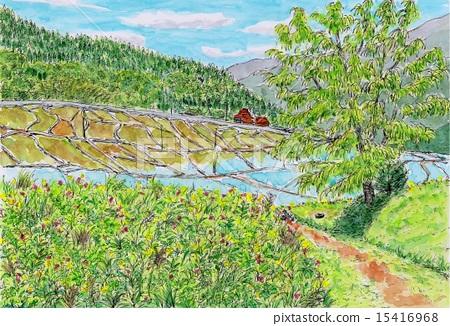 Rice terrace early summer 15416968