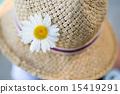 麦藁帽子に飾られたマーガレット 15419291
