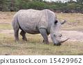 Safari - rhino 15429962
