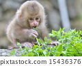 잎의 아기 15436376