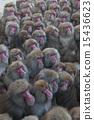 원숭이 경단 15436623