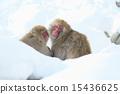 ลิงหิมะ 15436625