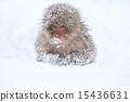 눈의 아기 15436631