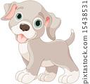 Cute puppy 15438531