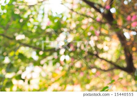 模糊的树冠背景 15440555