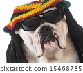 funny dog 15468785