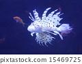 獅子魚 15469725