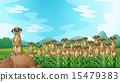 Meerkats 15479383