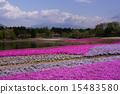 富士柴叶樱花节 15483580