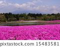 富士柴叶樱花节 15483581