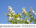 dogrose, wild, rose 15503232
