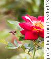꿀벌과 붉은 꽃 15506043