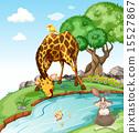animals, giraffe, rabbit 15527867