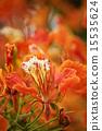 Phoenix Flower 15535624