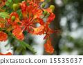 Phoenix Flower 15535637