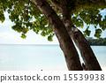 木陰とビーチ 15539938