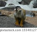 다람쥐 15540127