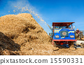 Corn harvesting by combine harvester  15590331