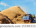 Corn harvesting by combine harvester  15590333
