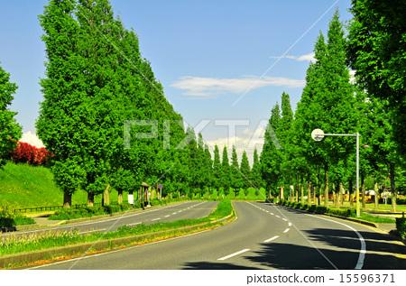 지바현 인자이시, 인자이 마키노하라 역 주변, 가로수 길 15596371