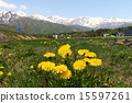 dandelion, northern, alps 15597261