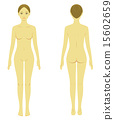 裸體 解剖學 肉 15602659