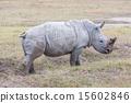 Safari - rhino 15602846
