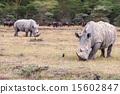 Safari - rhinos 15602847