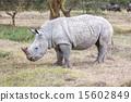 Safari - rhino 15602849