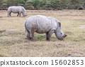 Safari - rhinos 15602853