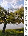 오아시스, 녹색, 구름 15605183