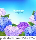 Hydrangea Flowers Background 15623752