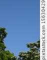 꽃, 흰색, 개화 15630429