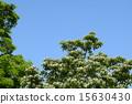 꽃, 흰색, 개화 15630430