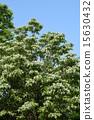 꽃, 흰색, 개화 15630432