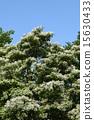 꽃, 흰색, 개화 15630433