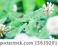 瓢蟲 蟲子 漏洞 15639201