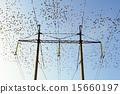 Starlings 15660197