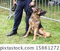 Police dog 15661272