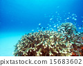 一群珊瑚和devastus我死了 15683602
