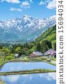 青荷村 水稻 北阿尔卑斯 15694034