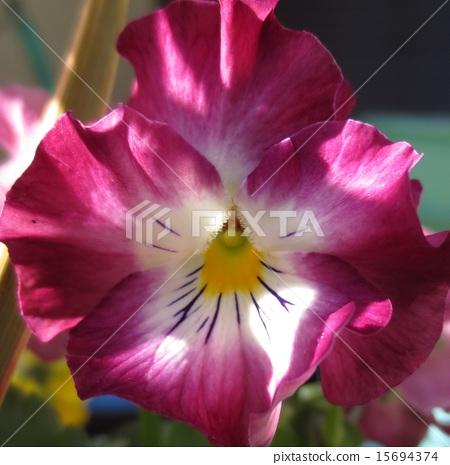 bloom, blossom, blossoms 15694374