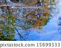 ผิวน้ำ,ฤดูใบไม้ร่วง,น้ำ 15699333