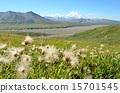 dandelion, alaska, nature 15701545